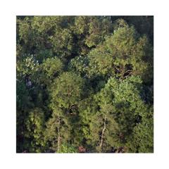 Vizpark Real Trees para Rhino